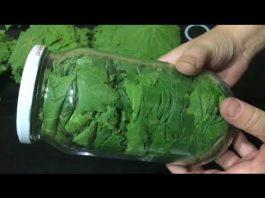 Susuz Yaprak Nasıl Basılır, Nasıl Pişirilir?